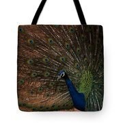 Peacock Show Off Tote Bag