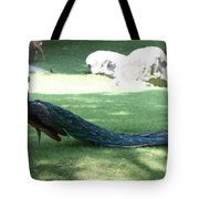Peacock Strutting His Stuff Tote Bag