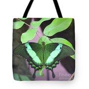 Peacock Swallowtail Tote Bag