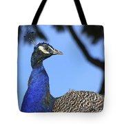 Indian Peacock Portrait Tote Bag
