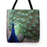 Peacock Up Close Tote Bag