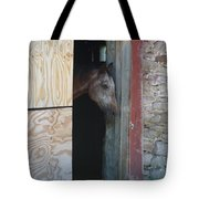 Peak A Book Horse Tote Bag