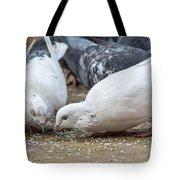 Pecking Pigeons Tote Bag