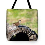 Pedernales Park Texas Carolina Wren Tote Bag