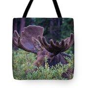 Peek-a-boo Moose Tote Bag
