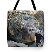 Peek-a-boo Turtle Tote Bag