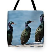 Pelagic Cormorants Tote Bag