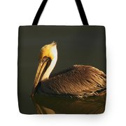 Pelican At Dark Tote Bag