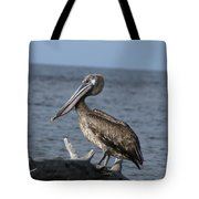 Pelican On Driftwood Tote Bag