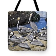 Pelican Rock Tote Bag