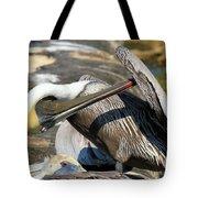 Pelican Scratch Tote Bag by Adam Jewell