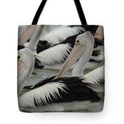 Pelicans Galore Tote Bag