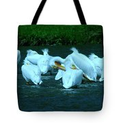 Pelicans Hanging Out Tote Bag