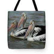 Pelicans In Australia 3 Tote Bag