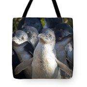 Penguins Tote Bag by Steven Ralser