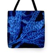 Penicillium With Spores Tote Bag