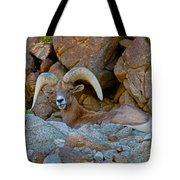 Peninsular Desert Bighorn Tote Bag