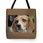 The Beagle Named Penny Tote Bag