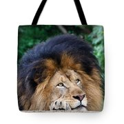 Pensive Lion Tote Bag