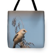 Perched Bearded Reedling Juvenile Tote Bag