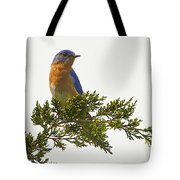 Perched Eastern Bluebird Tote Bag