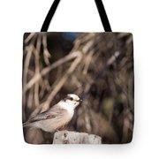 Perched Grey Jay Perisoreus Canadensis Watching Tote Bag