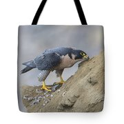 Peregrine Cleaning Beak Tote Bag