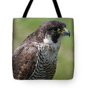 Peregrine Falcon 1 Tote Bag
