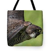 Peregrine Falcon 4 Tote Bag