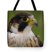 Peregrine Falcon Portrait Ecuador Tote Bag