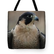 Peregrine Profile Tote Bag