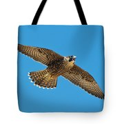 Peregrine Young Screaming For Food Tote Bag
