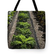 Perfect Lines Tote Bag by Anne Gilbert