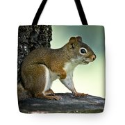Perky Squirrel Tote Bag