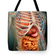 Perspective View Of Human Body, Whole Tote Bag by Stocktrek Images