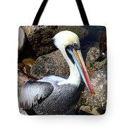 Peruvian Pelican Tote Bag