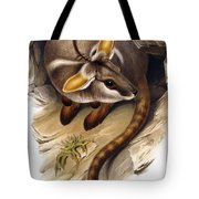 Petrogale Xanthopus      Ch 991244 Tote Bag by English School