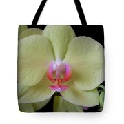 Phalaenopsis Fuller's Sunset Orchid No 2 Tote Bag