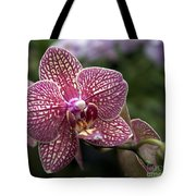Phalaenopsis Helen Alice Mary 2308 Tote Bag