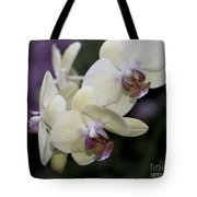 Phalaenopsis Ming Chao Dancer   8585 Tote Bag