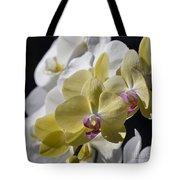 Phalaenopsis Orchids 2777 Tote Bag