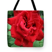 Photograph Reddest Of Roses Tote Bag