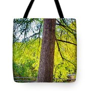 Picnic By The Cypress Tote Bag
