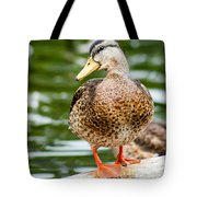 Picture Perfect - Mallard Duck Tote Bag