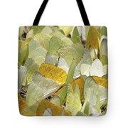 Pierid Butterfly Pieridae Puddling Tote Bag
