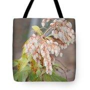 Pieris Japonica 'dorothy Wycoff' Andromeda  Tote Bag