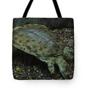 Pig-nosed Turtle Tote Bag