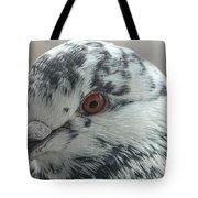 Pigeon Close-up Tote Bag