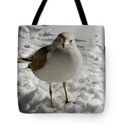 Pigeon In The Snow Tote Bag