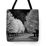 Pigeon Mountain Dogwoods In Black And White Tote Bag